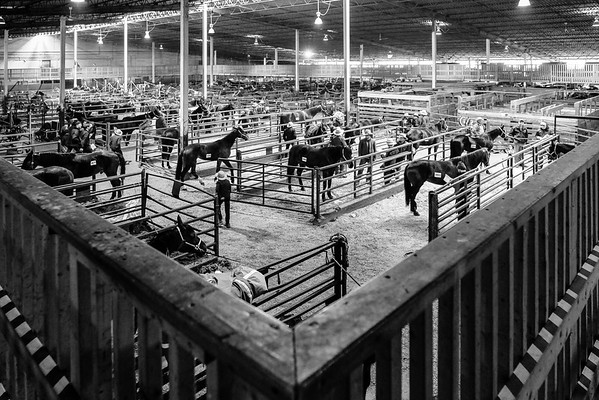 Wide angle view of the stockyards on auction day
