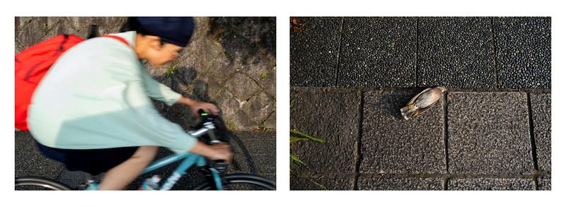 Bike Path, Kyoto 2019.