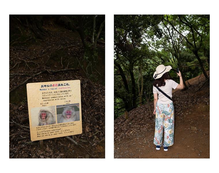 Arashiyama Monkey Park, Kyoto 2019.