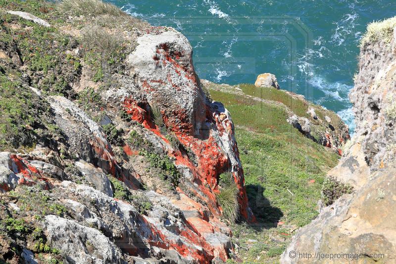 Furry Red Algae (Trentepohlia) on Rocks near Point Reyes Lighthouse