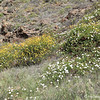 Santa Cruz Island Wildflowers
