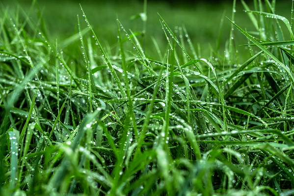 The Grass is Green