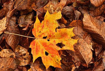 Leaf No. 3