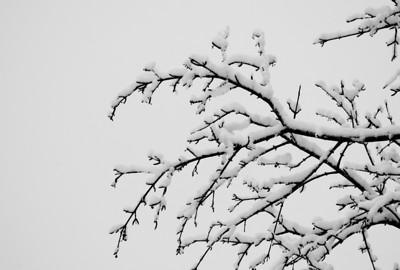 Delicate in Winter