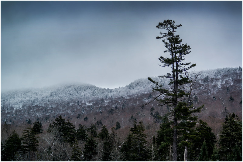 Adirondacks Long Lake Roadside Hillside 1 December 2016