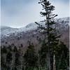 Adirondacks Long Lake Roadside Hillside 3 December 2016
