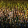Adirondacks Cedar River Flow Reeds 2 September 24 2016