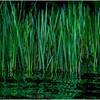 Adirondacks Cedar River Flow Reeds 4 September 24 2016