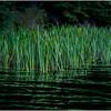 Adirondacks Cedar River Flow Reeds 3 September 24 2016