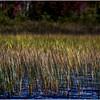 Adirondacks Cedar River Flow Reeds 1 September 24 2016
