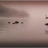 Adirondacks Chateaugay Lake Before Sunrise 2 July 2016