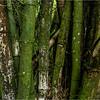 Puerto Rico February 2016 El Yunque Bamboo 2