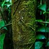 Puerto Rico February 2016 El Yunque Bamboo 4