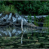Adirondacks Lake Rondaxe Shore 2 July 2016