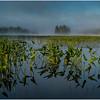 Adirondacks Lake Rondaxe Arrowhead 9 July 2016