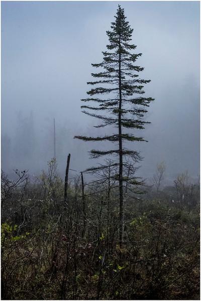 Adirondacks Cary Lake Morning Mist 87 September 2017