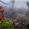 Adirondacks Cary Lake Morning Mist 5 September 2017