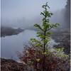 Adirondacks Cary Lake Morning Mist 12 September 2017
