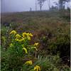 Adirondacks Cary Lake Morning Mist 9 September 2017