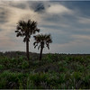 Florida Canaveral National Seashore 24 November 2017