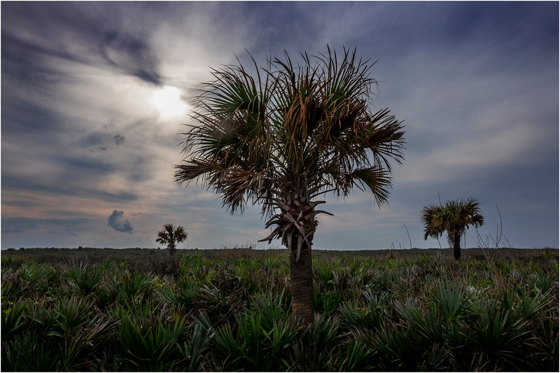Florida Canaveral National Seashore 26 November 2017