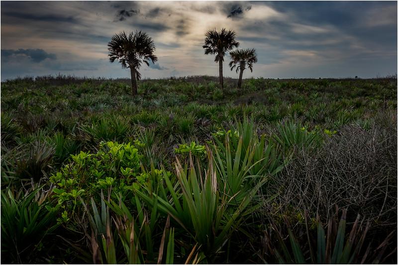 Florida Canaveral National Seashore 25 November 2017
