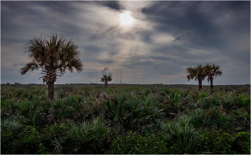 Florida Canaveral National Seashore 27 November 2017