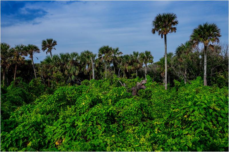 Florida Canaveral National Seashore 6 November 2017