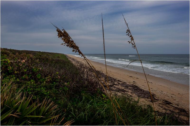 Florida Canaveral National Seashore 32 November 2017