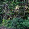 Adirondacks Forked Lake Inlet Shoreline 2 July 2017
