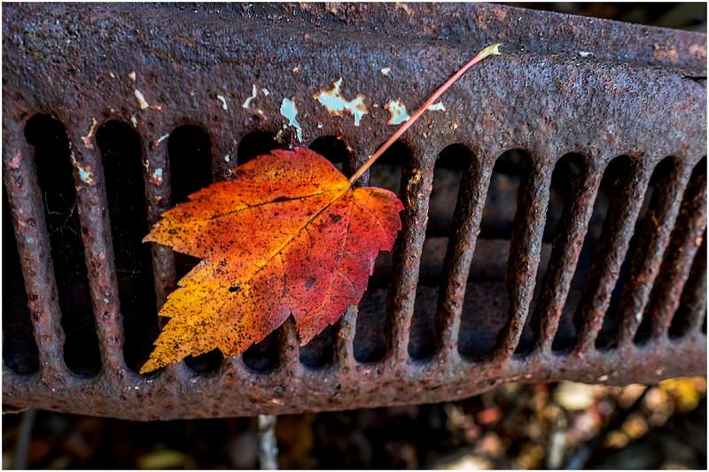 Ulster County NY Abandoned Bug 11 October 2017