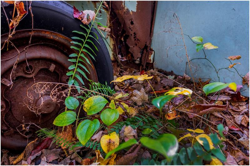 Ulster County NY Abandoned Bug 4 October 2017
