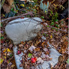 Ulster County NY Abandoned Bug 8 October 2017