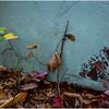 Ulster County NY Abandoned Bug 3 October 2017