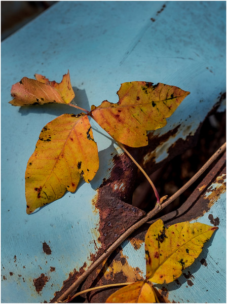 Ulster County NY Abandoned Bug 25 October 2017
