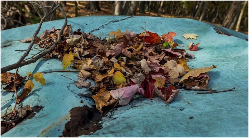 Ulster County NY Abandoned Bug 24 October 2017
