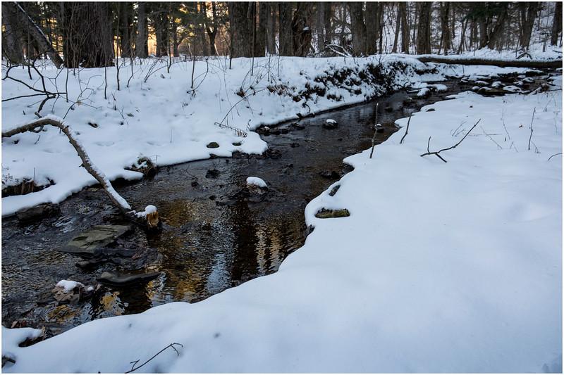 Thatcher Park NY Woods 5 January 2017