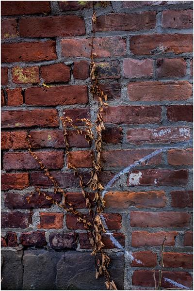 Troy NY Back Alley 16 Brick and Vine January 2017