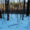Thatcher Park NY Woods 1 January 2017
