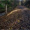 New Paltz NY Bike Path Walk 19 October 2017