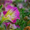 Altamont NY Flowers 5 June 2018