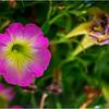 Altamont NY Flowers 1 June 2018
