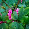 Delmar NY Backyard Flowers 1 May 2018
