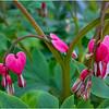 Delmar NY Backyard Flowers 2 May 2018