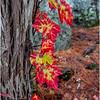 Adirondacks Buttermilk Falls 9 October 2018