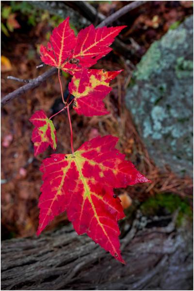 Adirondacks Buttermilk Falls 7 October 2018