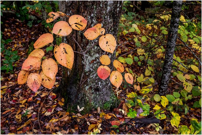 Adirondacks Cedar River 3 October 2018
