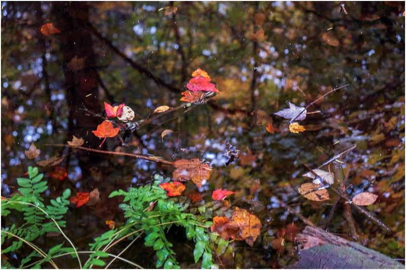 Adirondacks Buttermilk Falls 25 October 2018