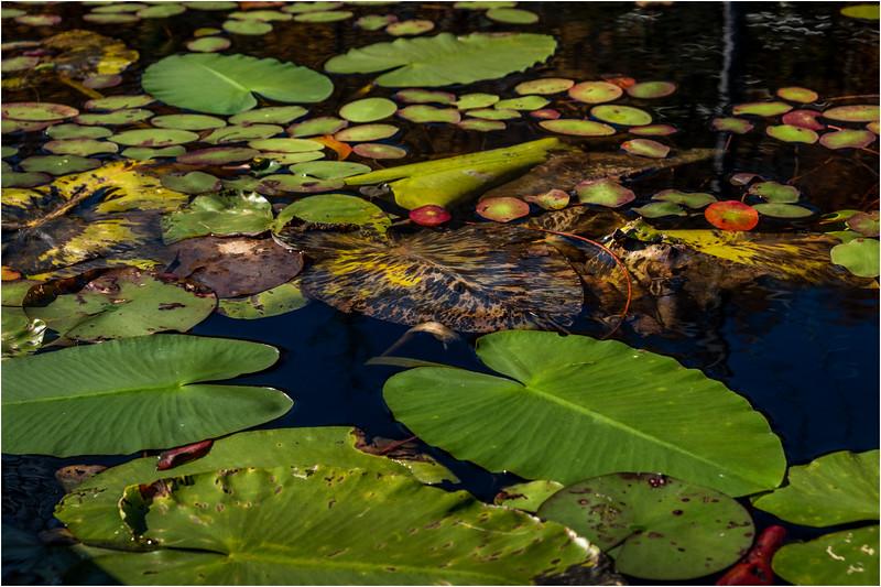 Adirondacks Essex Chain Seventh Lake 16 October 2018