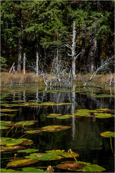 Adirondacks Essex Chain Fifth Lake 7 October 2018